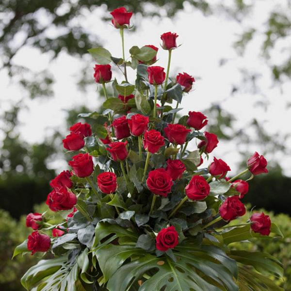 centro de 100 rosas tallo largo 250€