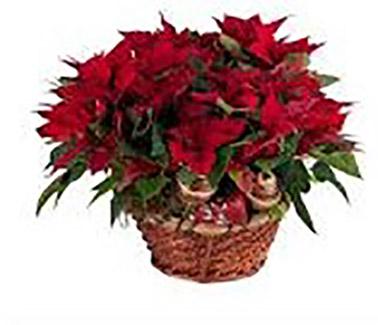 cesta flores de pascua 1