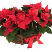 cesta flores de pascua 2