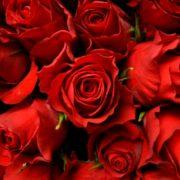 imagenes-de-ramos-de-rosas-rojas