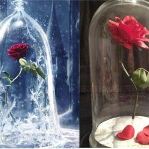 rosas en cupula